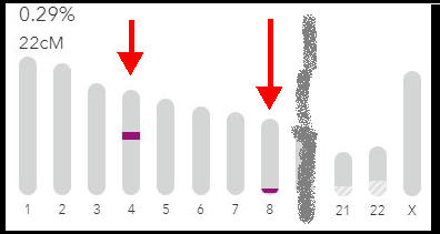 one-to-one chromosome browser with shared DNA on two segments